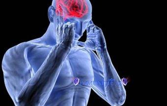 Sinir sisteminin orqanizmdə rolu