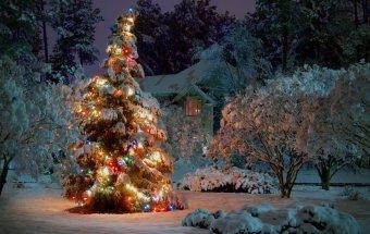 Yeni ilin atributları-Şam ağacı, nar və qarpız.